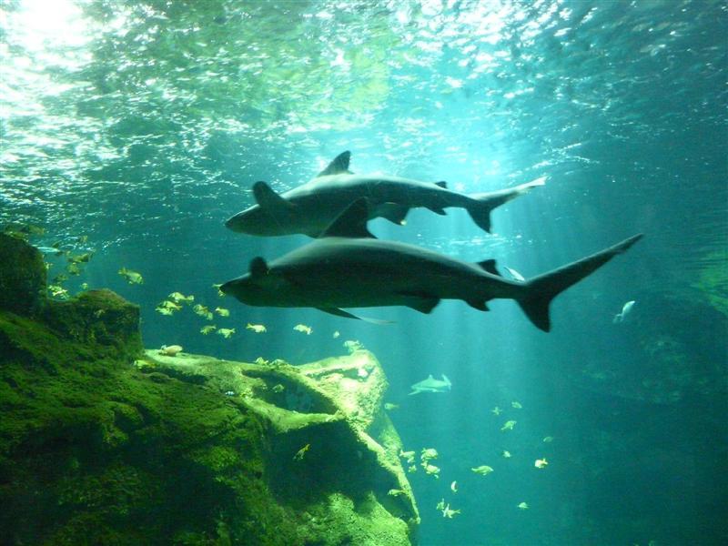 aquarium de la Rochelle 08090922