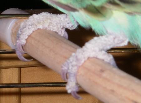 gale du bec - Acariose, gale du bec et des pattes. Imgp8312