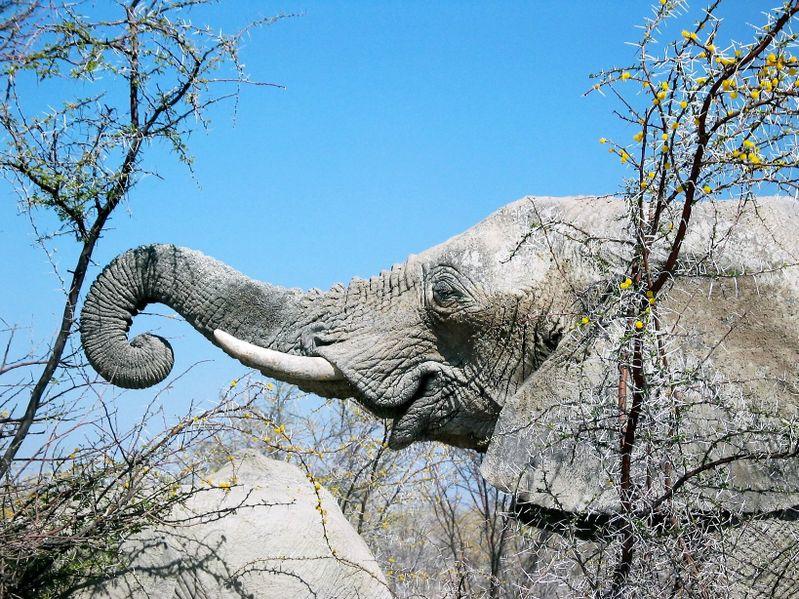 l'Éléphant 0012