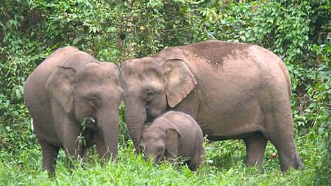 l'Éléphant Bebe10