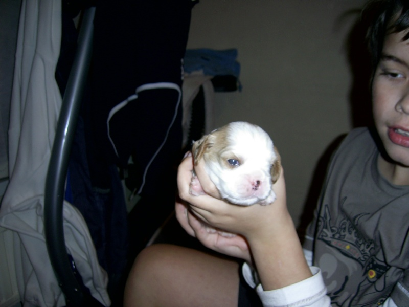 puppies Pic_0011