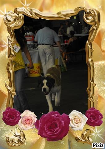 les filles du royaume des orchidees  - Page 2 Pixiz_86