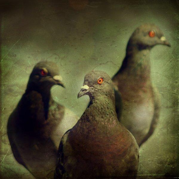 Sve vrste Ptica - Page 8 Birds_10