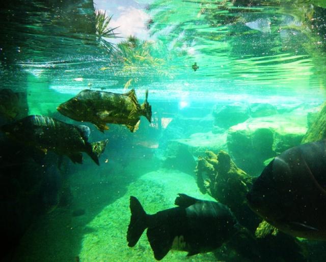 Podvodni cudesni svet - Page 3 Plenty10