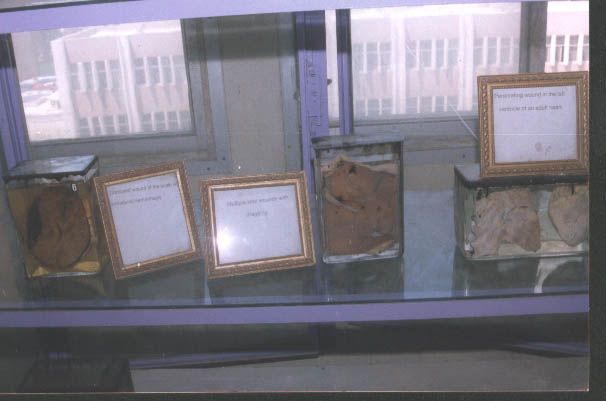 forensic museum (1) 15881518