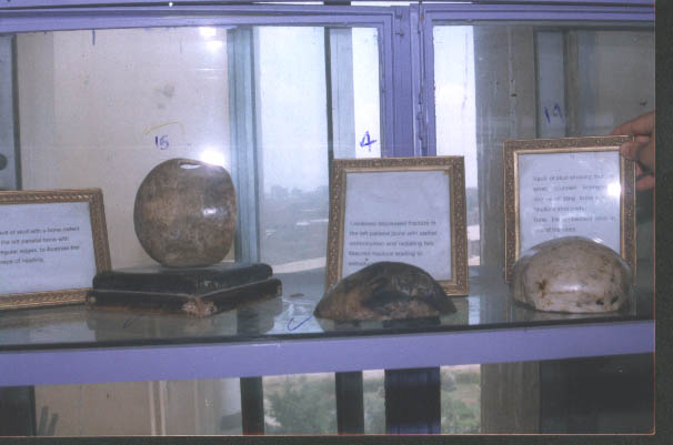 forensic museum (1) 15881520