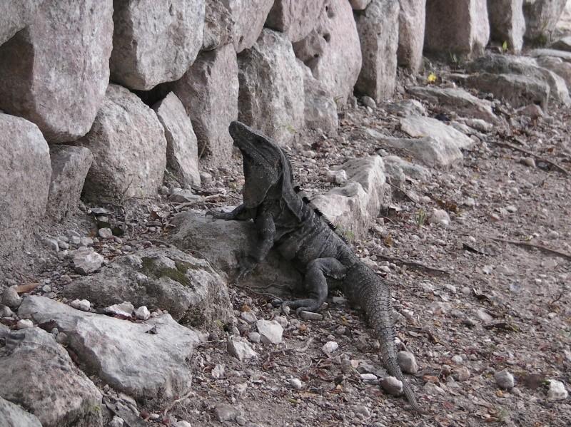 Mexique Sany0013