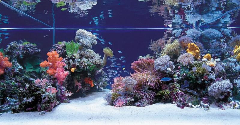 Bac coraux mous  43061610