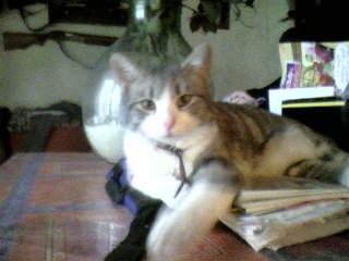 présentation de vos animaux: chats: Photo-10