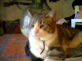 présentation de vos animaux: chats: Photo-11