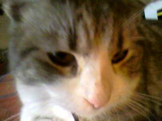 présentation de vos animaux: chats: Photo-14
