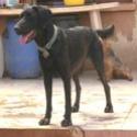 Mulan (chien) Mulan010