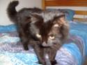 je vous présente mon chat Billy Famill10