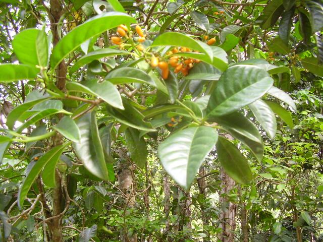 plantes tropicales a identifier P1310