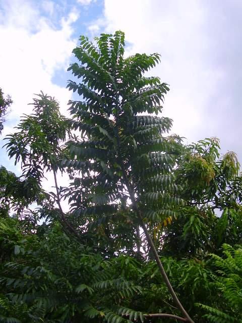 plantes tropicales a identifier P1510