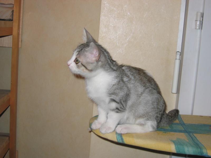 CREMLY: chat adopté puis rendu à l'association Img_1410