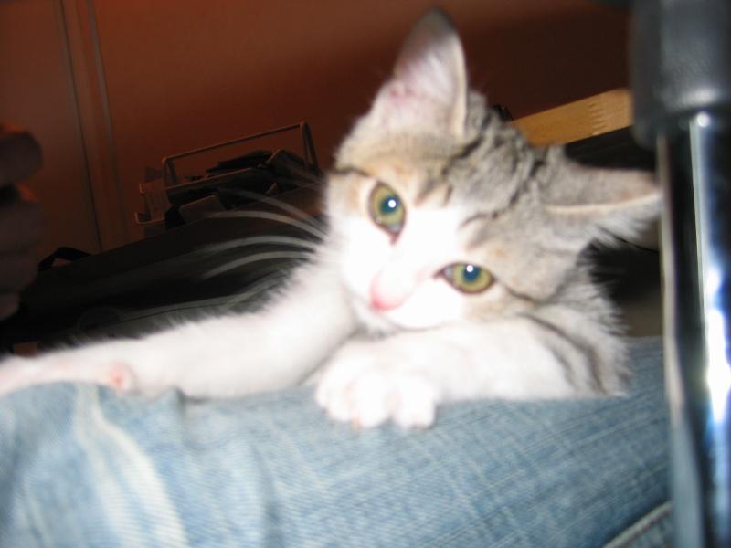 CREMLY: chat adopté puis rendu à l'association Img_1411