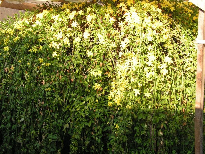 Le jardin de Marie Pict0013