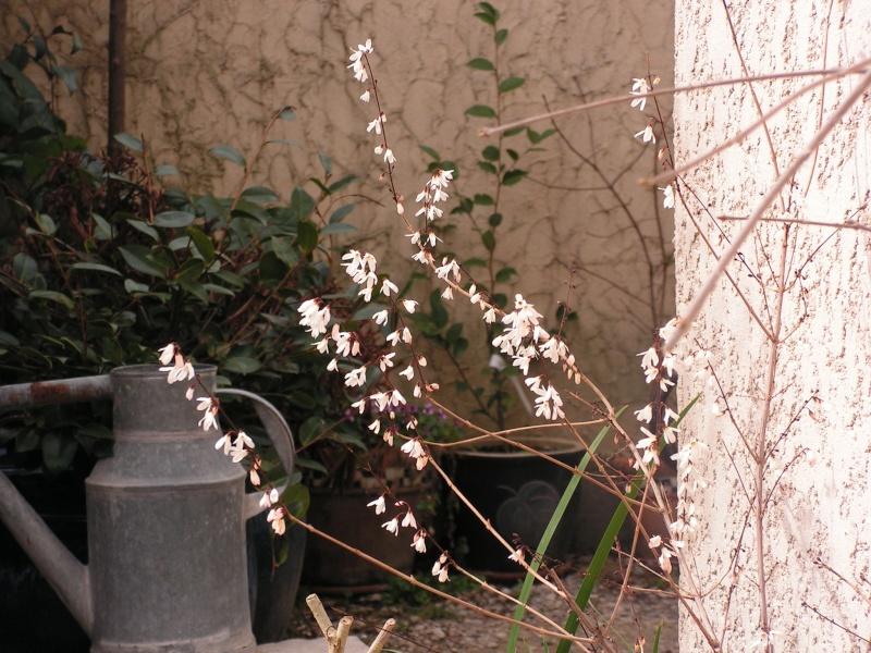 jardin Dr Jekyll 10 février 2008 Pict0018