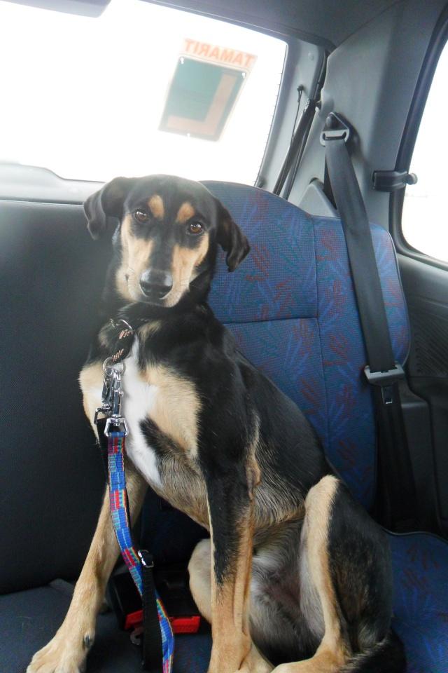 Lotus cachorrete de 4 meses busca hogar. Valencia. Sam_0610