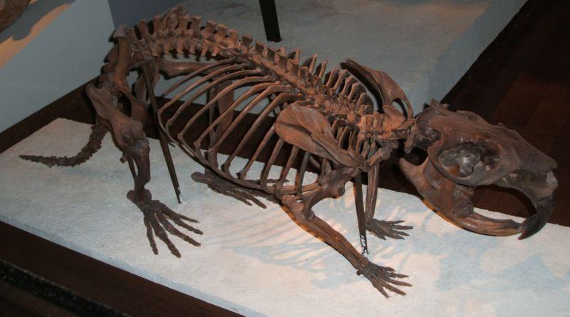 Le castor géant 800px-10