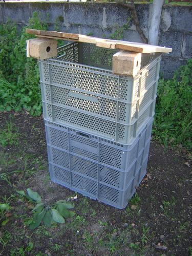 Mi compostador!! 11717512