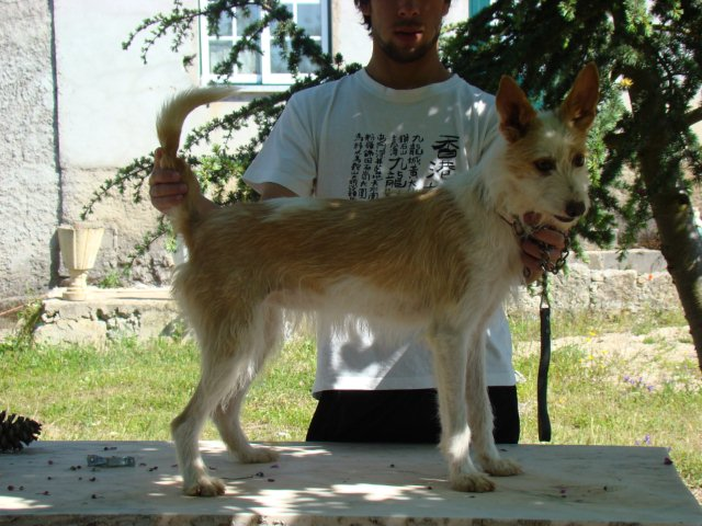 alguns dos meus cães - Página 2 Dsc01510