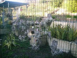 Jardin botanique de Nice en hiver 208010