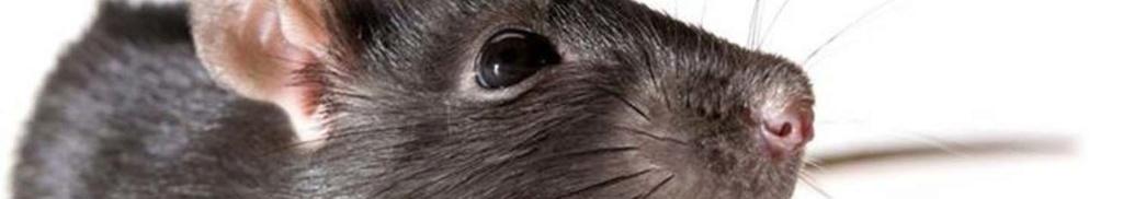 [RP] Animisme, Totems et esprits Rat10