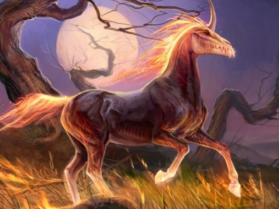 Les écuries de Galathé Animal12