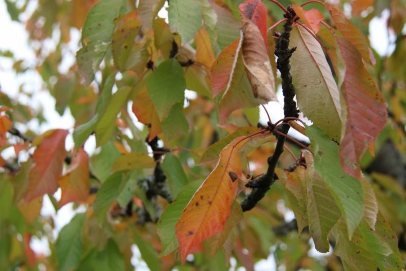 Couleurs d'automne 2012 sur Wangen Img_9931