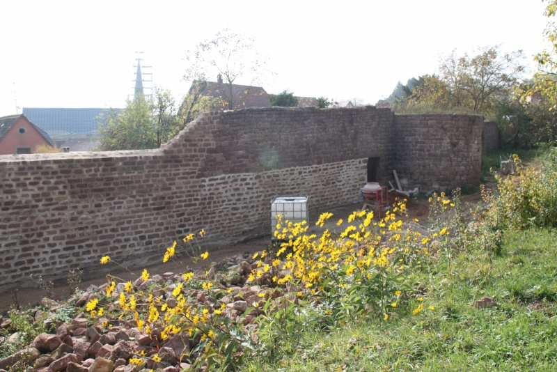 Chantier d'insertion pour la restauration du mur d'enceinte de Wangen - Page 2 Img_9936