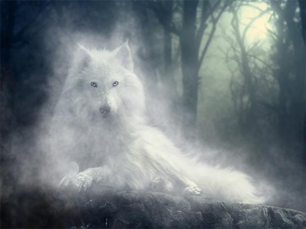 Le souvenir de l'eau Wolf-i10