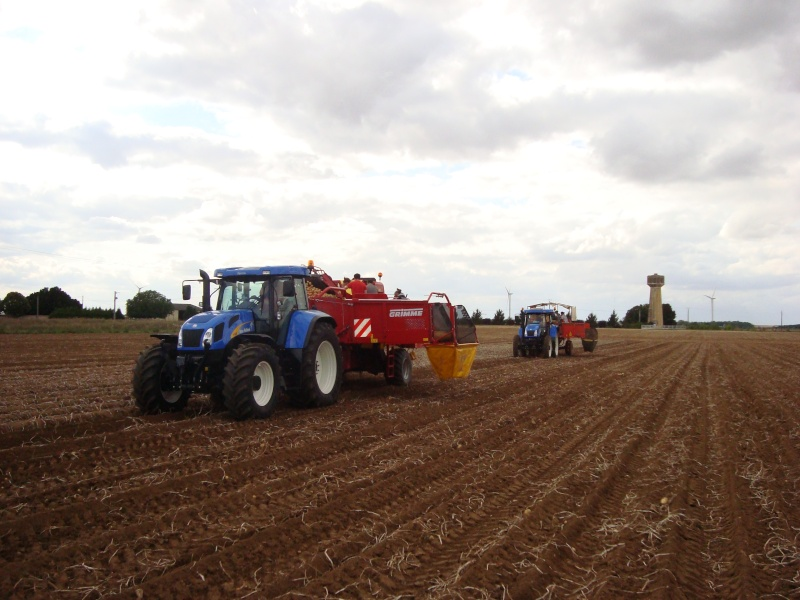New holland Patate11