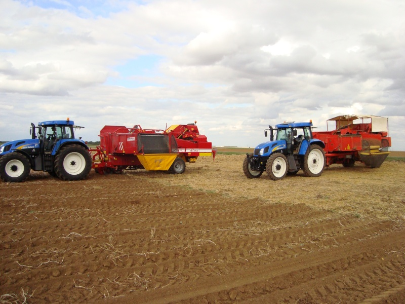 New holland Patate12