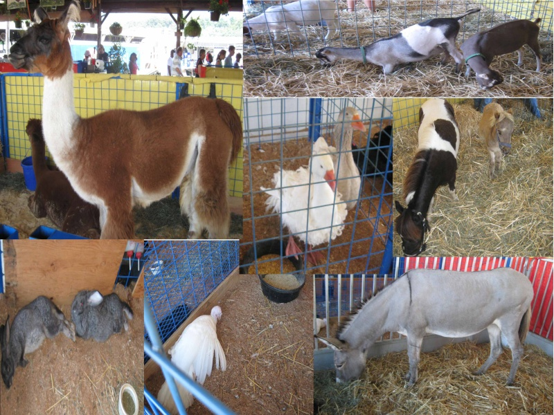 we went to the fair  Pictum10