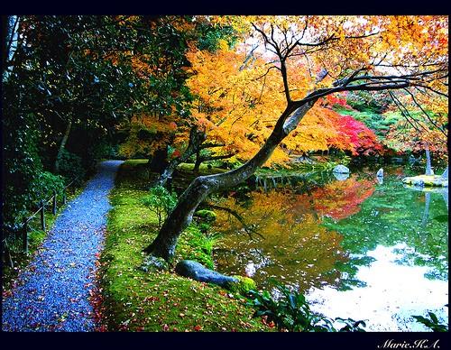 Autumn 20876010