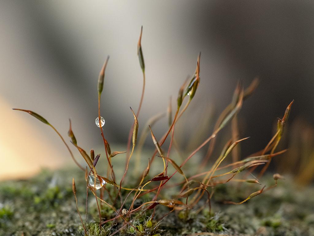 Foret miniature ... Dscf4210