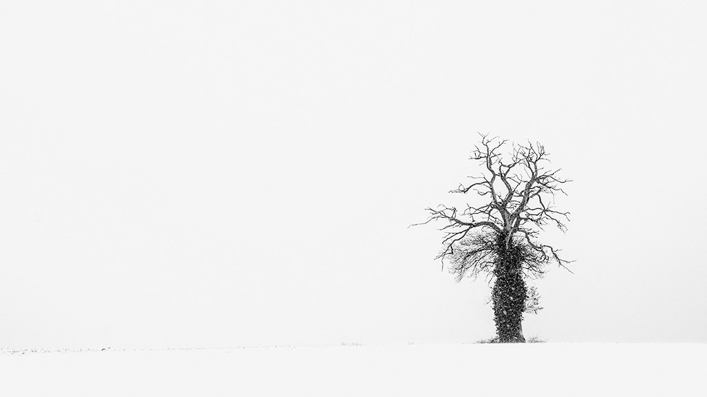 Minimalisme hivernal .. Grand_10