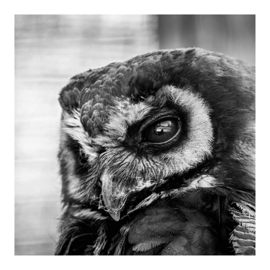 [Portraits] Portraits animaliers P1010088