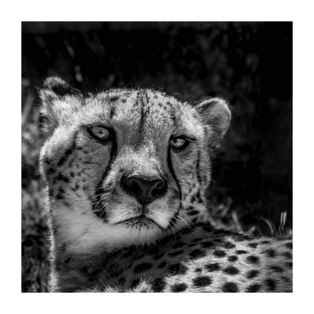 [Portraits] Portraits animaliers P1010089