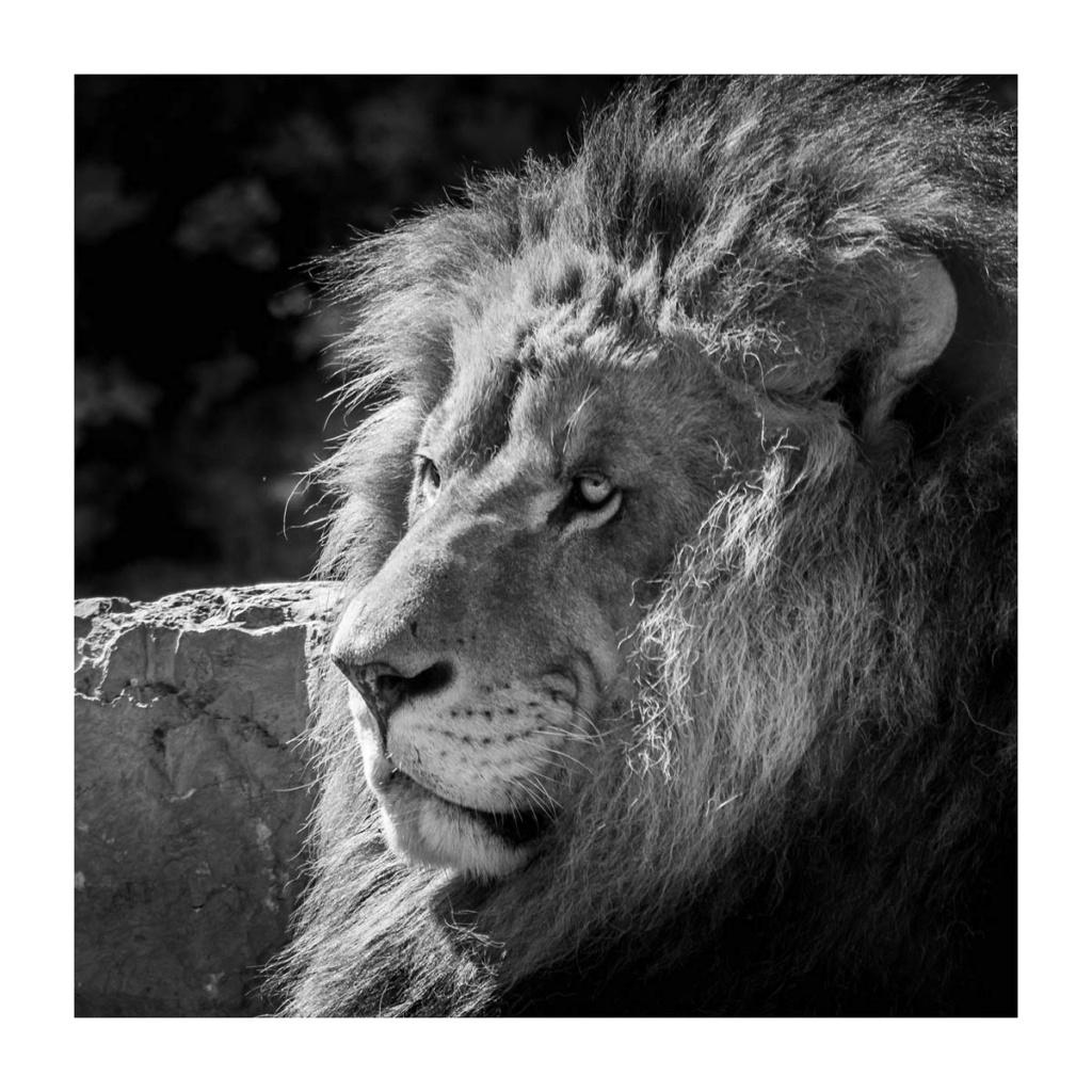 [Portraits] Portraits animaliers P1010090