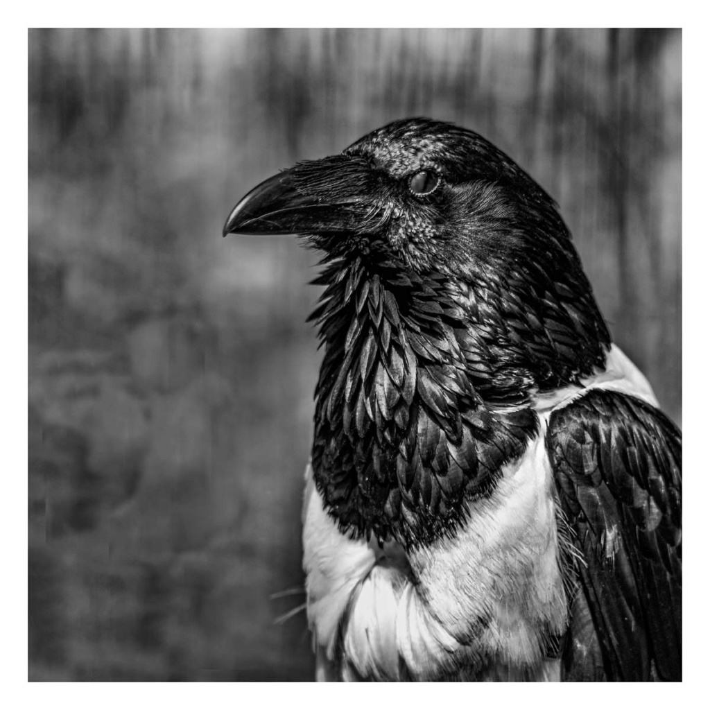 [Portraits] Portraits animaliers P1010091