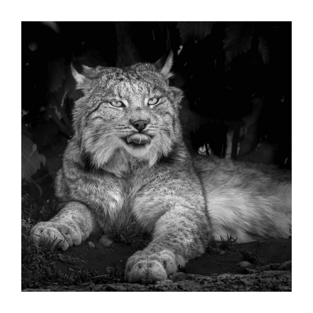 [Portraits] Portraits animaliers P1010092