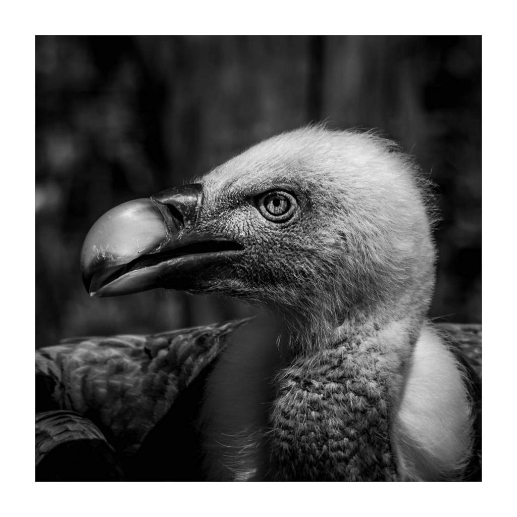 [Portraits] Portraits animaliers P1010094