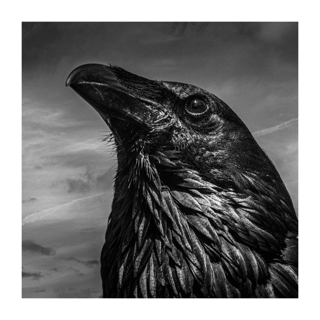 [Portraits] Portraits animaliers P1010095