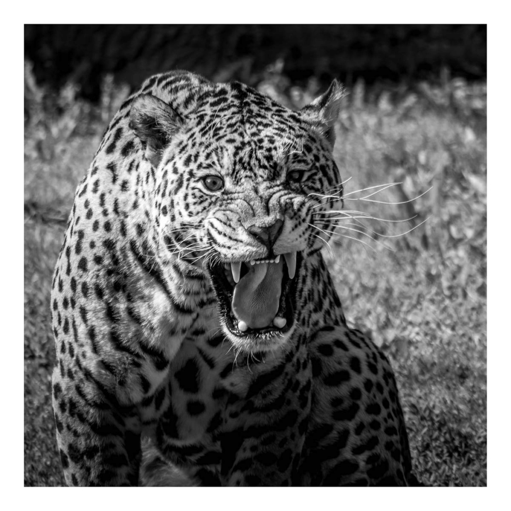 [Portraits] Portraits animaliers P1010096