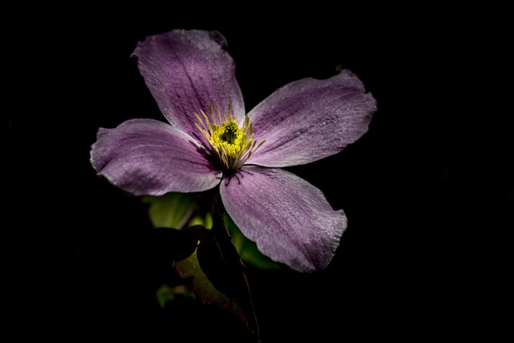 [Flore] Black colors. P1010142
