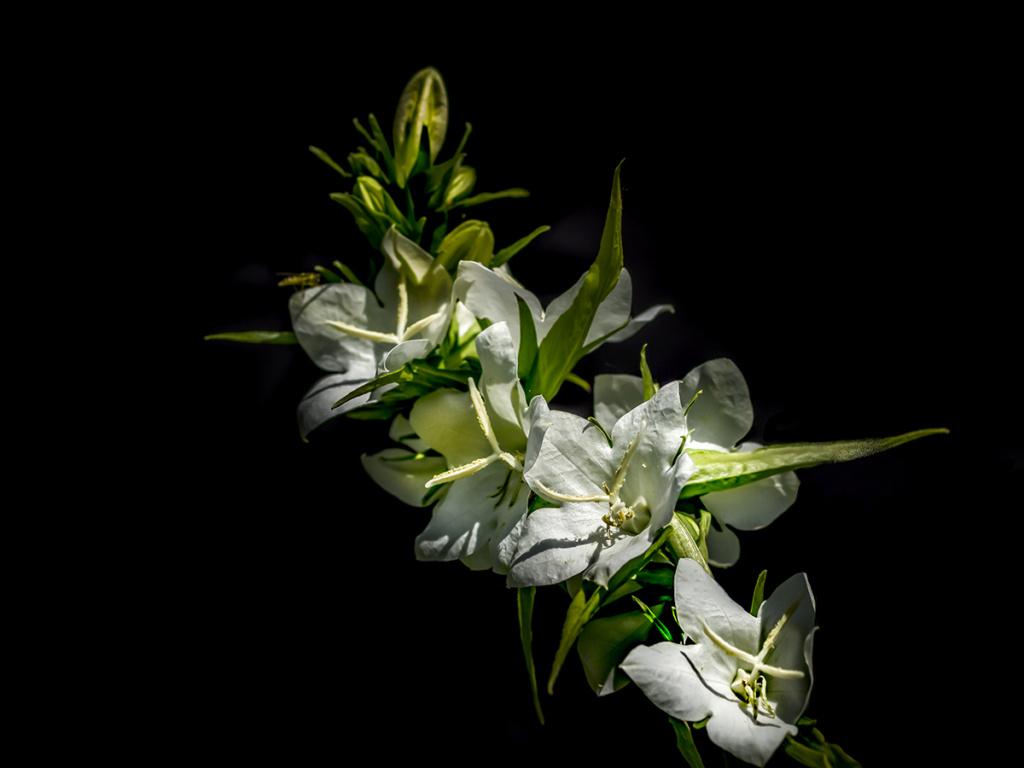 [Flore] Black colors. P1010144