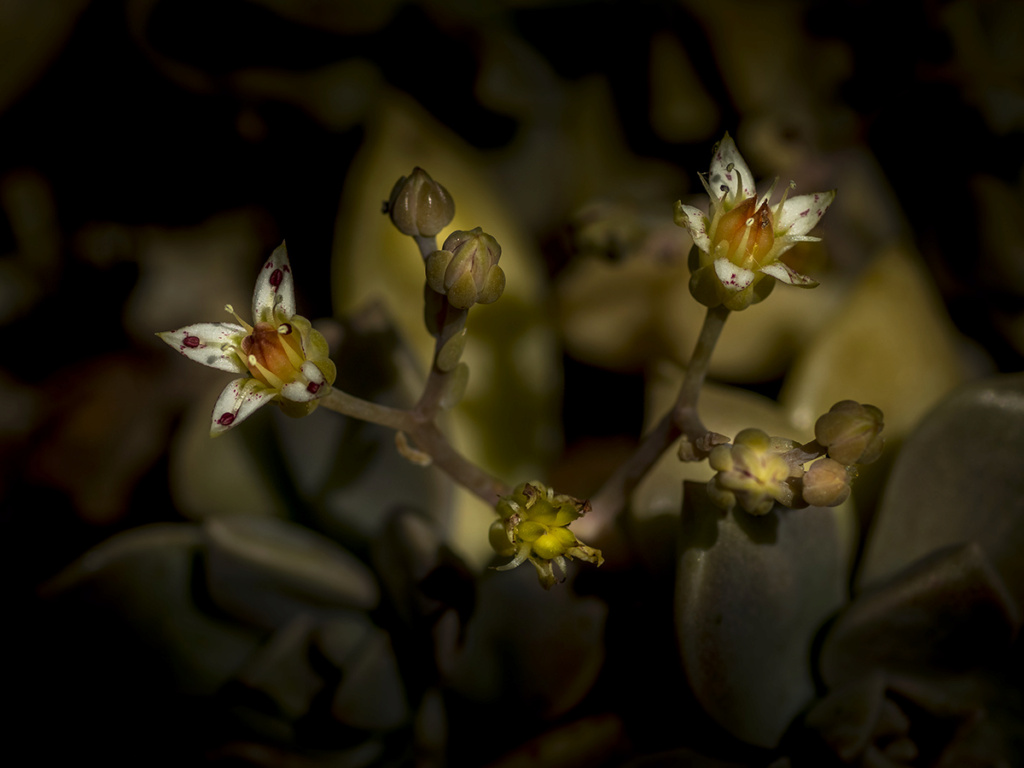 [Flore] Black colors. P1010145